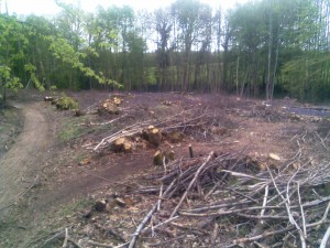 Coppice site extracted using and Iron Horse