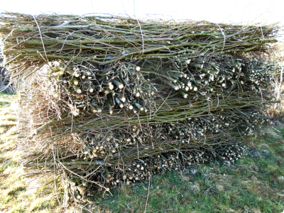 willow facines coppice products