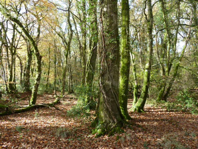 Semi-natural broadleaf woodland