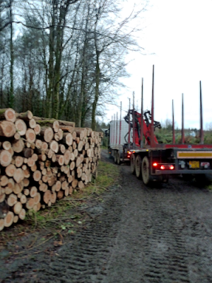 roundwood timber collection
